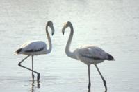 El parc natural censa unes 200.000 aus hivernants al delta de l´Ebre
